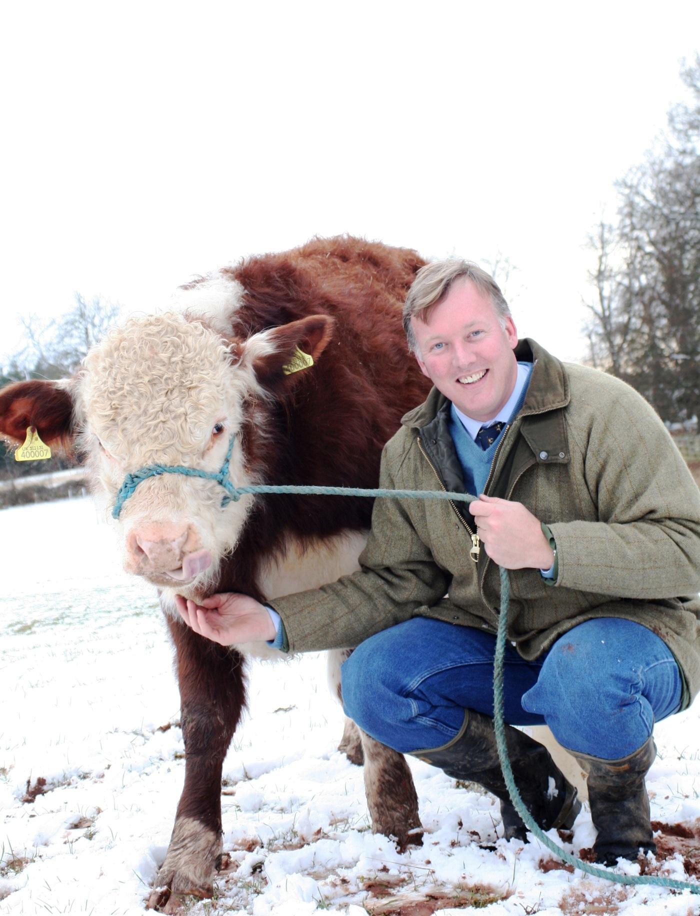 Bill with Calf